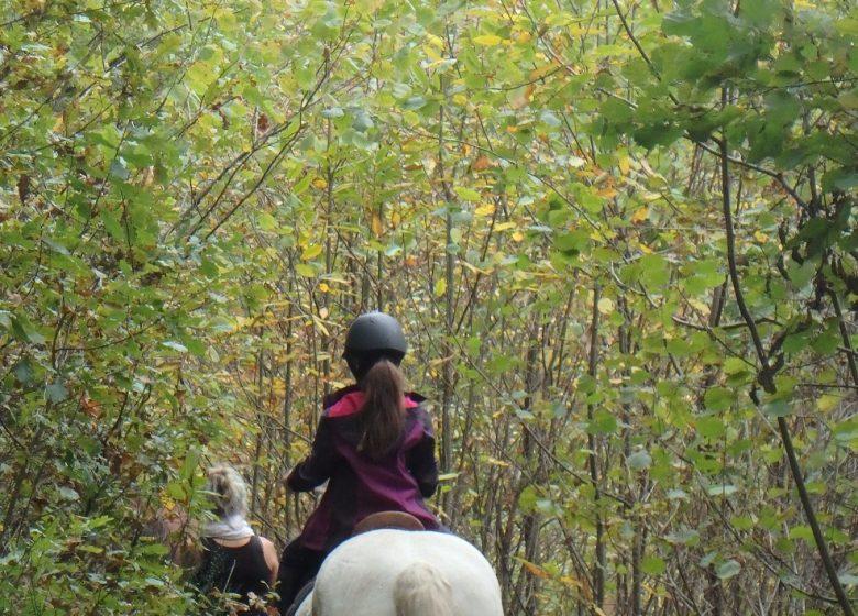 balade à cheval avec Ado Centaure à Biert