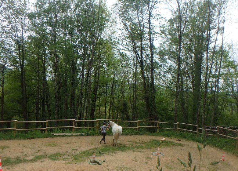 Ado Centaure à Biert