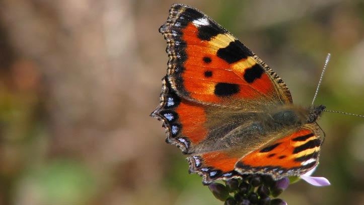 papillon posé sur une fleur