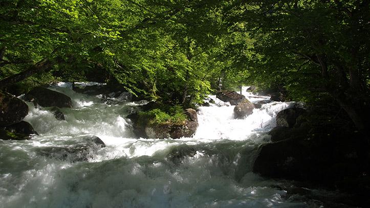 Ruisseau d'Ars à travers la foret