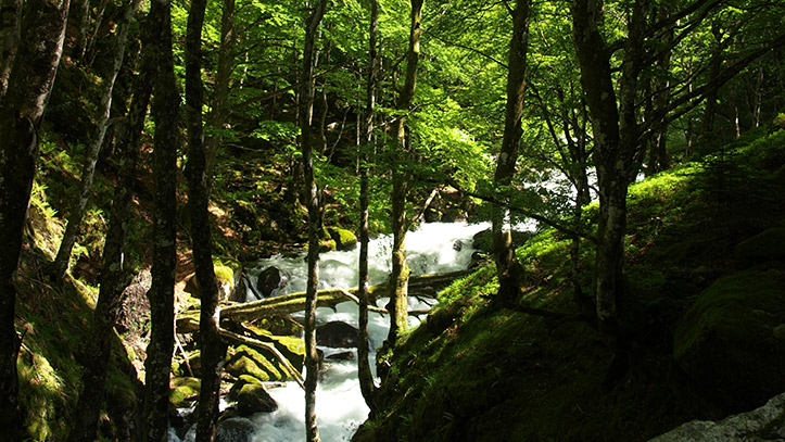 la rivière de l'Ars et la foret de hêtres
